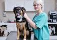 clinica-veterinaria-maesano-messina-11.jpg